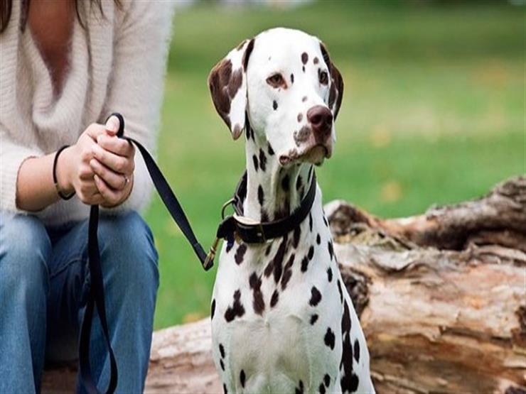 مدينة إسبانية تفرض ضريبة على اقتناء الكلاب